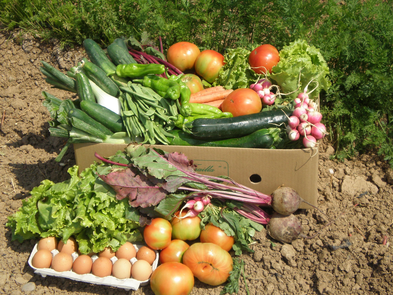 La trailla de la huerta navarra ecol gica hasta tu casa for Cultivo de verduras en casa
